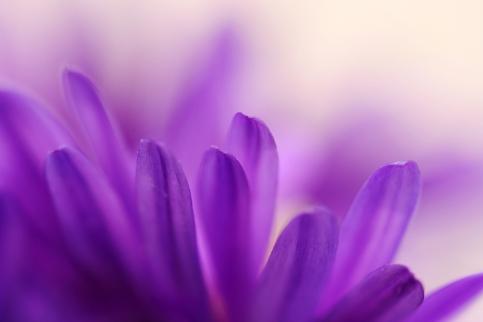 perfume-bysamia