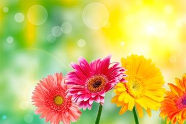 flores-margaridas-aromaterapia-bysamia